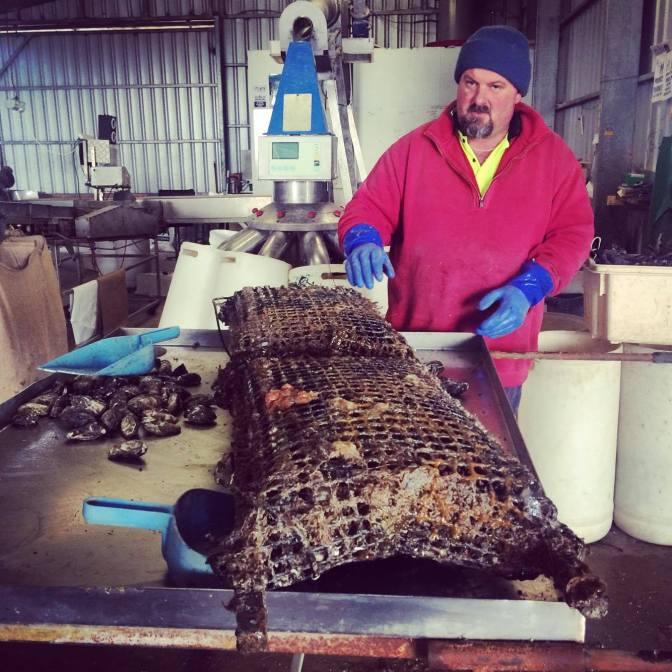 Simon the oyster farmer, Coffin Bay, South Australia