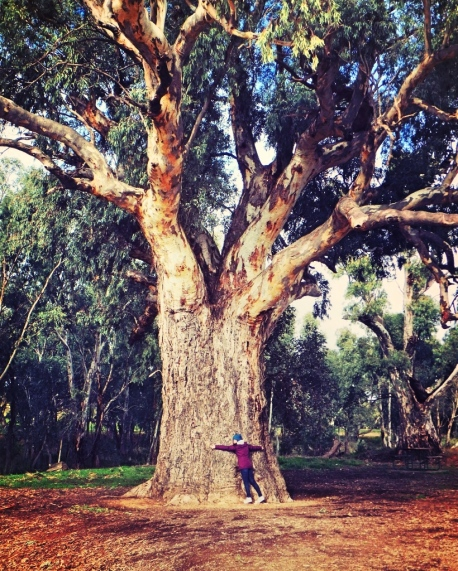 Hugging giant gum tree in Ororoo, South Australia