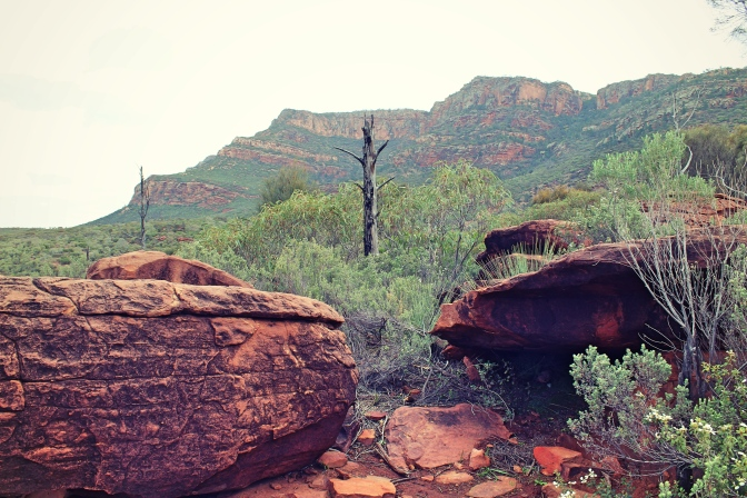 View of Arkaroo Rock, Flinders Ranges, South Australia
