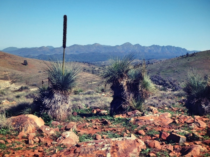 View of Wilpena Pound walls, Flinders Ranges, South Australia