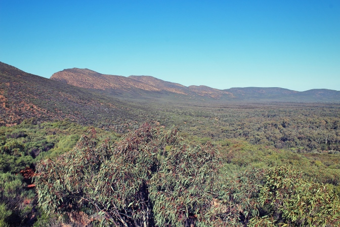 Walls of Wilpena Pound from within, Flinders Ranges