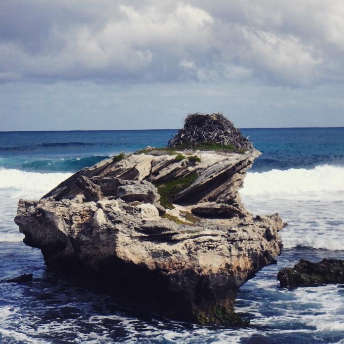 Osprey nest, Rottnest Island Western Australia