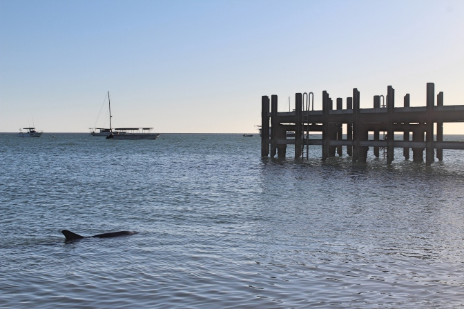 Monkey Mia pier with dolphin, Shark Bay, Western Australia