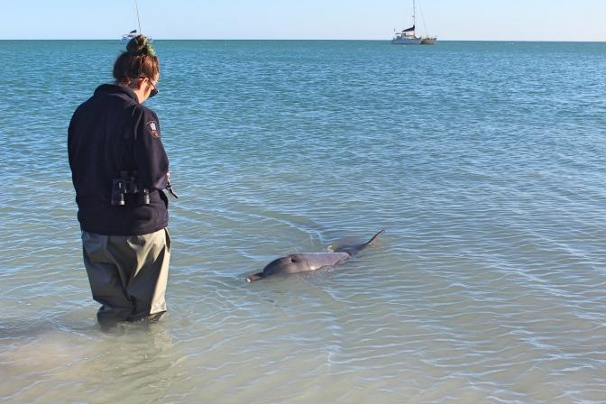 Dolphin ranger, Monkey Mia, Western Australia