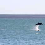 Clicking with dolphins and dugongs: Shark Bay and Monkey Mia