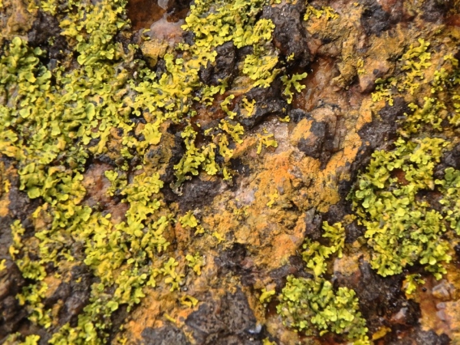 Lichen, Frenchman Peak, Cape Le Grande National Park WA