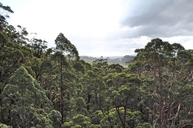Treetop walk, Valley of the Giants, Walpole Western Australia
