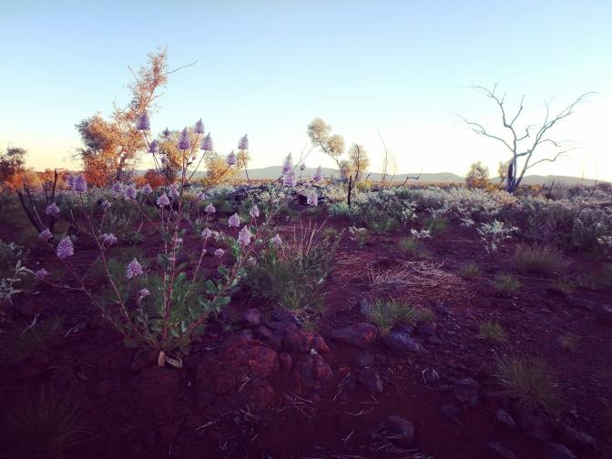 Wildflower landscape, Karijini, Pilbara, Western Australia