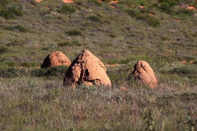 Termite nest, Cape Range National Park, Western Australia