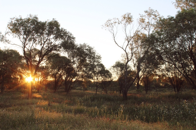 Sunset in the Pilbara trees, Western Australia