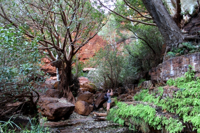 Ferns, Gorge bottom, Karijini, Western Australia