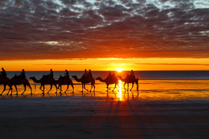 Camels at sunset Cable Beach, Broome Western Australia