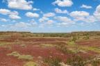 Surviving Wolfe Creek: Backpacker nightmares in the Kimberley