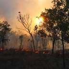 Bugs, crocs and bushfires: a million ways to die in the Top End
