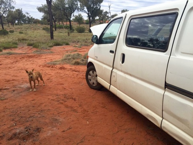 Dingo and camper van Northern Territory