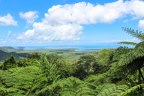 Where the forest meets the sea: Discovering the Daintree Rainforest