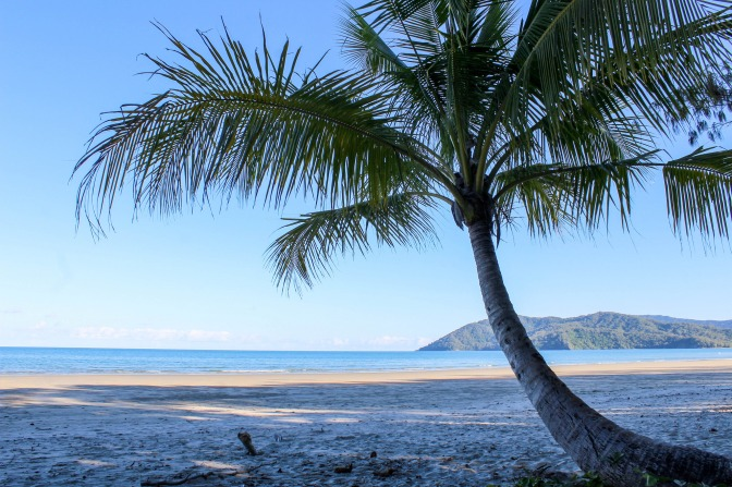 View of palm and reef from Daintree rainforest