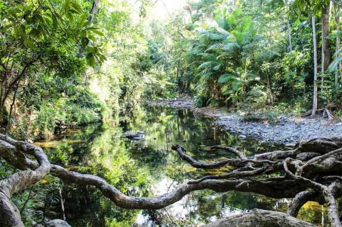 Daintree river swimming hole