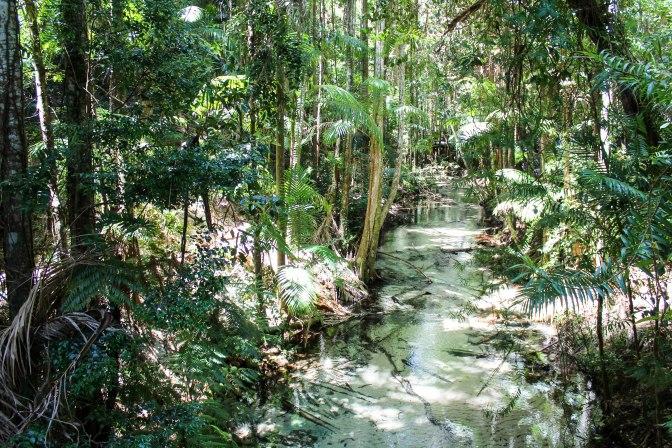 Rainforest, Fraser Island, Australia